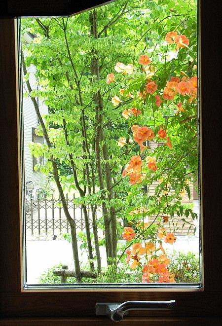 ノウゼン(窓)-450-661.jpg