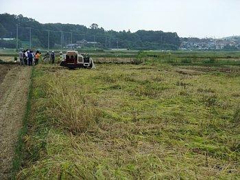 稲刈りの日 350.jpg