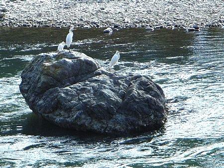 岩と鷺 450-337-h.jpg