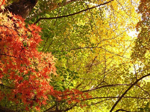 紅葉と黄葉 600-450.jpg