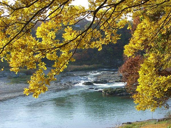 荒川と黄葉 600-450.jpg