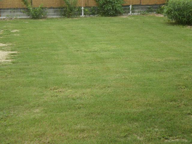 芝生.jpg