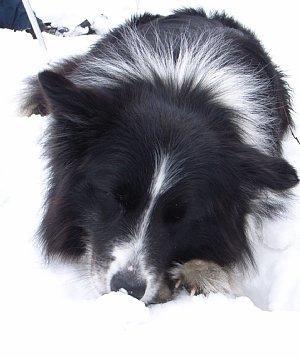 雪美味しいね.jpg
