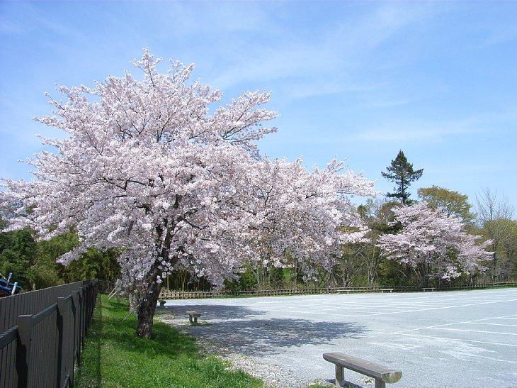 RIMG0214 資料館桜.jpg