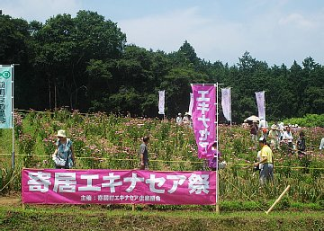 echinaceamaturi0299 360.jpg